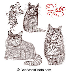 Collection of vector detailed hand drawn cats - Vector set...