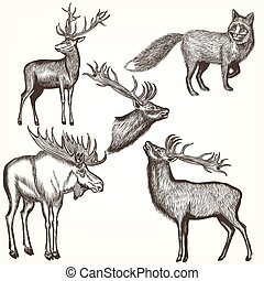 Collection of vector hand drawn animals in engraved style.eps