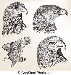 Collection of vector hand drawn eagles
