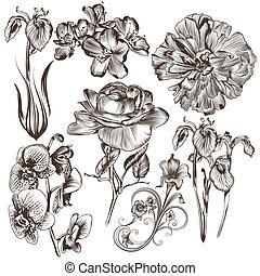 Collection of vector hand drawn flo - Collection of high...