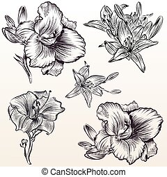 Collection of vector hand drawn flowers.eps