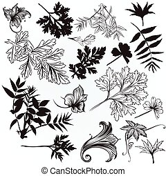 Collection of vector hand drawn leafs.eps