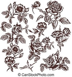 Collection of vector hand drawn rose flowers