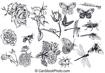 Collection of vector hand drawn roses and insects for design.eps