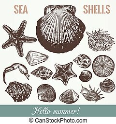 Collection of vector sea shells high detailed objects.eps