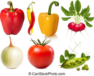 Collection of vector vegetables - Collection of photo-...
