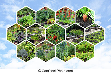Collection of vegetable gardens.
