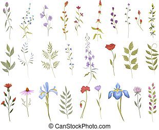 Collection of wild flowers. Set of floral elements