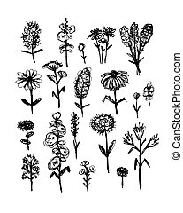 Collection of wildflowers, sketch fro your design