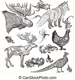 Collection or set of vector detailed hand drawn animals in vintage style for design