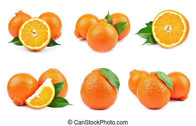 collection orange