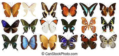 collection, papillons, blanc, isolé, coloré