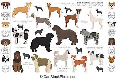 collection, service, style., pays, white., regarder, fonctionnement, couleur, origine, différent, plat, isolé, chiens