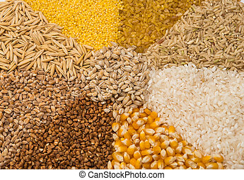 Collection Set of Cereal Grains: Wheat, Barley, Oat, Corn,...