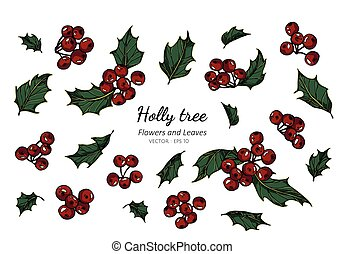 Collection set of Holly berry and leaf drawing illustration.