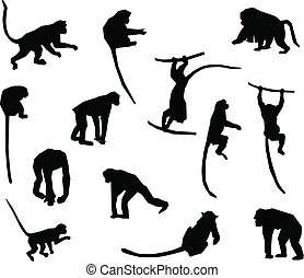 collection, singe, -, singe, silhouette., vecteur