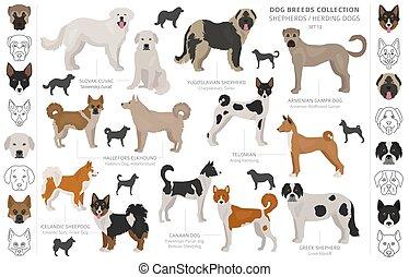 collection, style., pays, white., origine, couleur, différent, berger, plat, isolé, chiens, herding