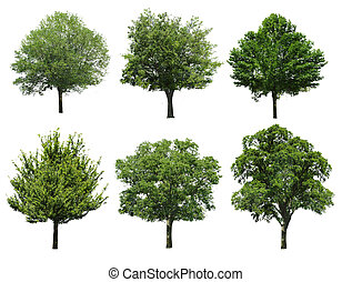 Collection tree isolated on white