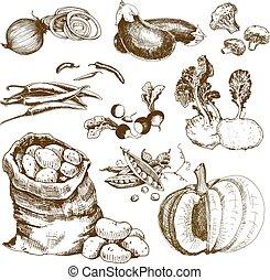 collection., verdura
