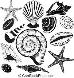 collection., vetorial, conchas, seashells