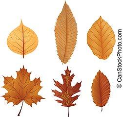 collections, feuilles, séché