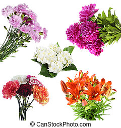 Collections of  summer flowers