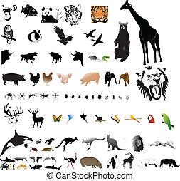 collezione, di, animali