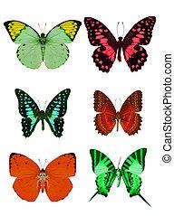 collezione, di, colorato, farfalle, isolato, bianco