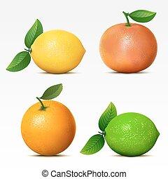 collezione, di, frutte