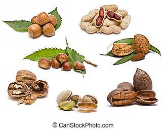 collezione, di, nuts.