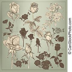 collezione, di, vettore, vendemmia, mano, disegnato, rose, per, disegno