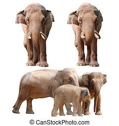 collezione, elefante