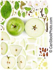 collezione, mela, astratto