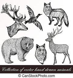 collezione, o, disegno, disegnato, vendemmia, mano, disegnato, animali, set, inciso
