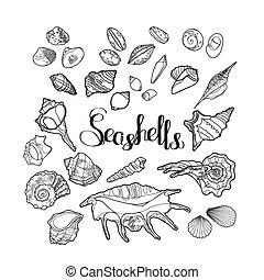 collezione, seashells