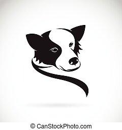 collie, bild, hund, vektor, hintergrund, weißes, umrandungen