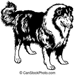 rough or long haired collie, scottish shepherd dog, black and white image