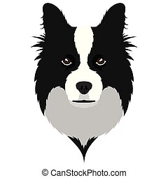 collie, borda, avatar