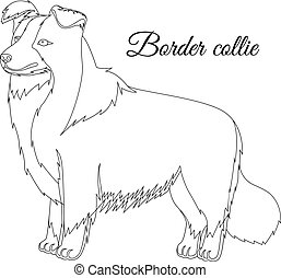 collie, borda, cão, esboço