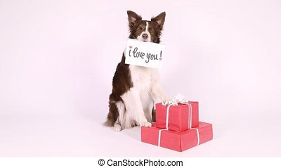 "Collie border dog with card ""I love you"" - Lovely Collie..."