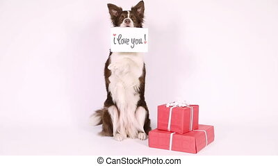 "Collie border dog with card ""I love you"" over white -..."