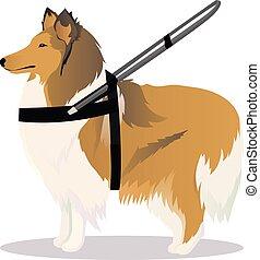 collie, cachorro guia