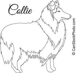 Collie dog outline vector illustration