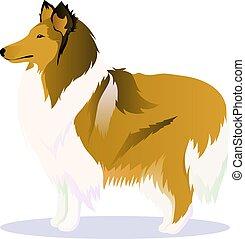 Collie dog vector illustration