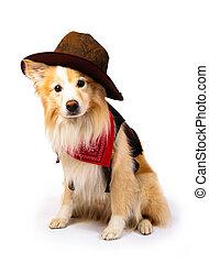 collie, grens, cowboy