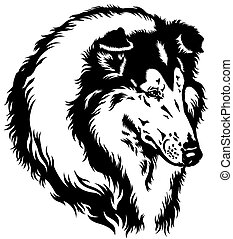 collie head - rough or long-haired collie dog head, black...
