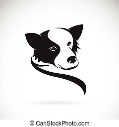 collie, imagem, cão, vetorial, fundo, branca, borda