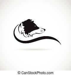 collie, immagine, cane, vettore, fondo, bianco, bordo