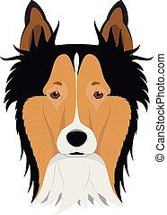 collie, isolado, ilustração, cão, vetorial, fundo, áspero, branca