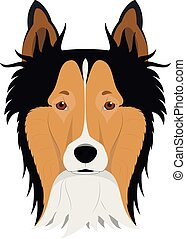 Collie Rough dog isolated on white background vector illustration
